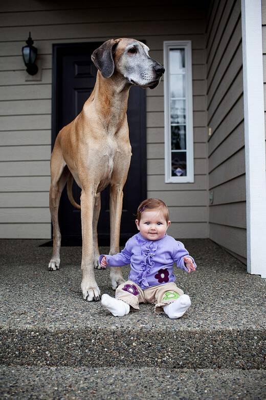 22 παιδάκια και οι γιγαντόσωμοι σκύλοι τους υπόσχονται να σας φτιάξουν τη μέρα