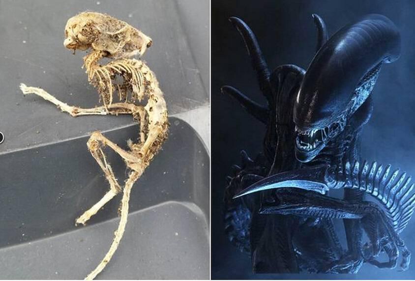 Βρετανία: Ανακάλυψε πλάσμα που μοιάζει με «alien» στην κουζίνα του σπιτιού του!