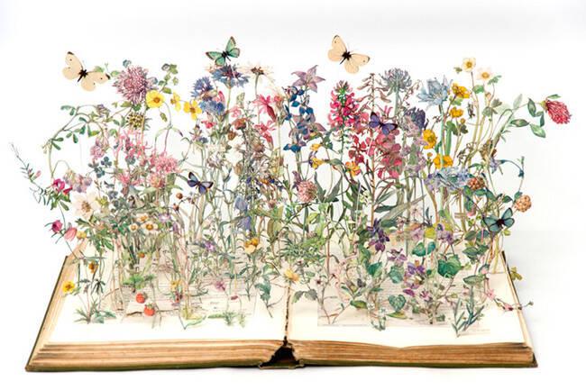 <i>Wild Flowers of the British Isles</i>, 2013
