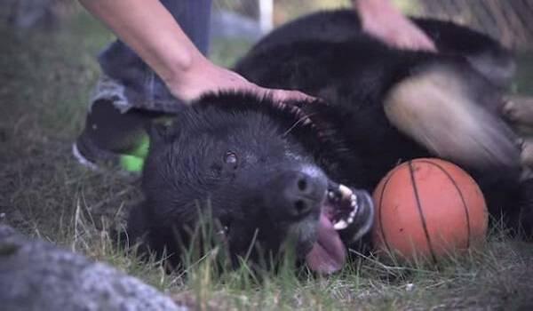 Ηρωικό σκυλί κρατάει για 40 ώρες ζωντανό ένα μικρό αγόρι, μετά από σφοδρό τροχαίο ατύχημα.