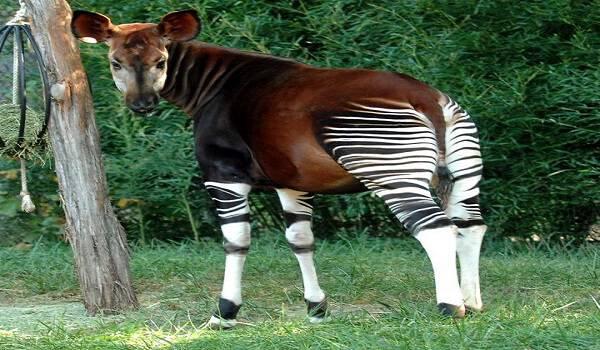 9 ζώα που μοιάζουν μυθικά αλλά είναι 100% αληθινά! Το Νο8 είναι πανέμορφο!