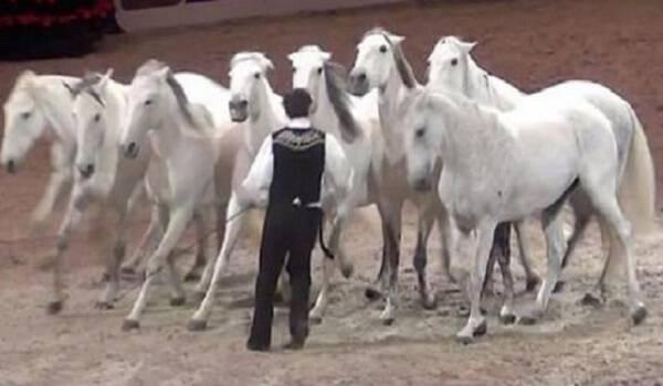 Στέκεται μπροστά από αυτά τα άλογα. Όταν αρχίζει η μουσική συμβαίνει το εντυπωσιακό!