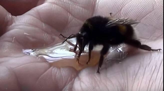 Βρήκε μία παγιδευμένη Μέλισσα και της έσωσε τη ζωή. Όταν δείτε ΤΙ έκανε για τον ευχαριστήσει, δεν θα το Πιστεύετε!