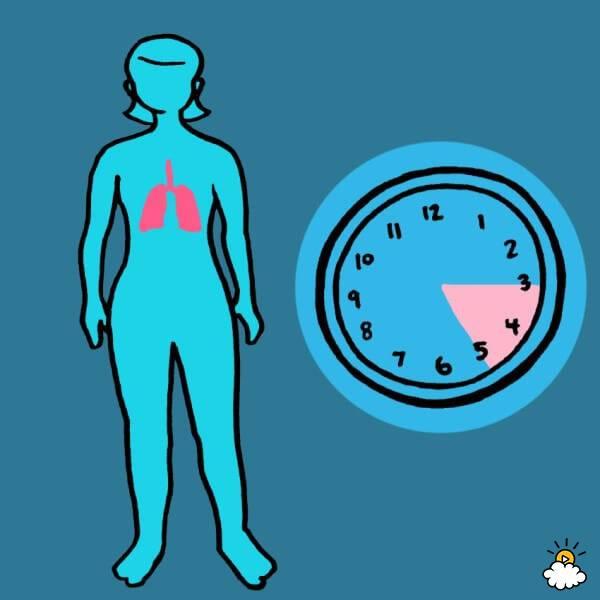 3am - 5am: Lungs