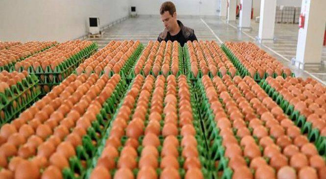 Συναγερμός για διατροφικό σκάνδαλο: Το εντομοκτόνο Fipronil και σε τρόφιμα με αυγά