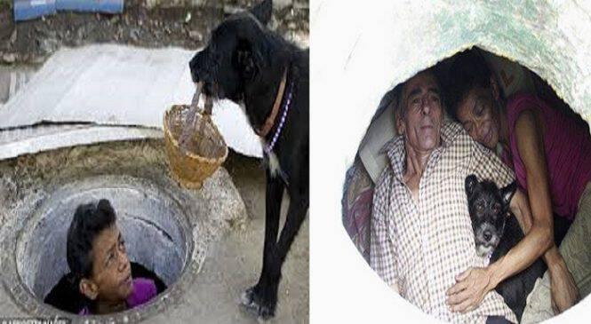 Ένα σπίτι κάτω από τη γη : Ζευγάρι ζει σε υπόνομο για 22 χρόνια(ΒΙΝΤΕΟ)