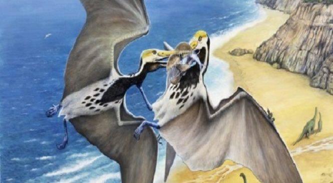 Ανακαλύφθηκε αρπακτικό μεγέθους αεροπλάνου, με άνοιγμα φτερών 11 μέτρα