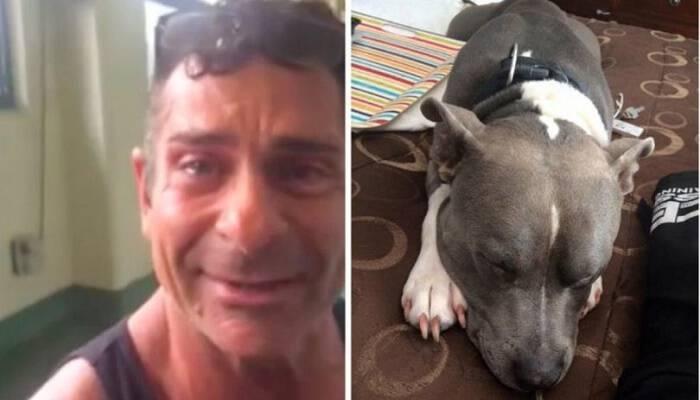 Για έναν ολόκληρο χρόνο έψαχνε το χαμένο του σκύλο. Δύο ημέρες πριν του κάνουν ευθανασία, τον βρήκε και του έσωσε τη ζωή