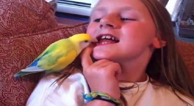 Ένα βίντεο που κάνει τον γύρο του διαδικτύου! – Παπαγάλος της έβγαλε το δόντι με μία κίνηση!