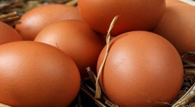 Οι επιστήμονες τρελάθηκαν: 14χρονος «γεννά» αυγά στην Ινδονησία(ΒΙΝΤΕΟ)