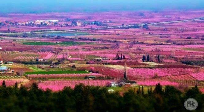 Οι χιλιάδες ανθισμένες ροδακινιές της Βέροιας σε 16 φωτογραφίες βγαλμένες από τα παραμύθια