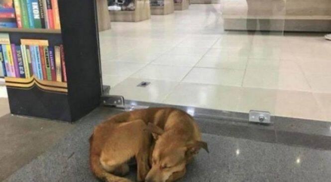 Αδέσποτος σκύλος προκαλεί συγκίνηση με το βιβλίο που έκλεψε και αλλάζει τη ζωή του