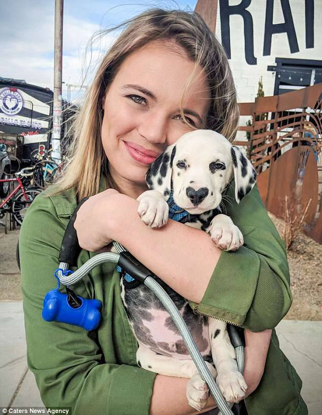 Never change his spots:Lexi Smith from Denver, Colorado, realised a life-long dream of owning a Dalmatian when she picked up 12-week-old Wiley last month