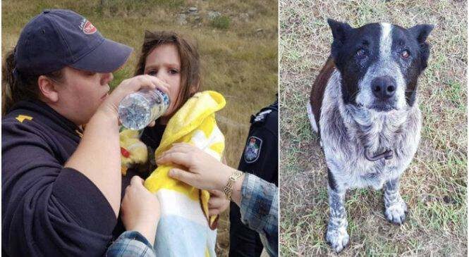 Μαξ: Ο σκύλος «ήρωας» που έσωσε ένα τρίχρονο κοριτσάκι