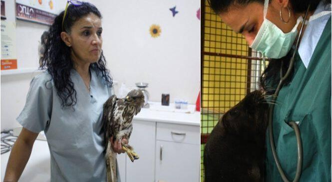 Ελληνίδα κτηνίατρος έχει αφιερώσει τη ζωή της στην φροντίδα των πληγωμένων άγριων ζώων και βραβεύεται από το ΑΠΘ