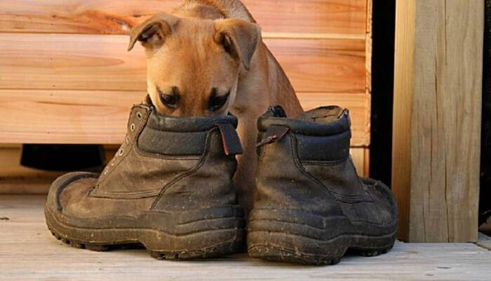 Μυρίζουν τα Παπούτσια ή τα Πόδια σας; Ό,τι κι αν Συμβαίνει, σας Έχουμε τη Λύση!