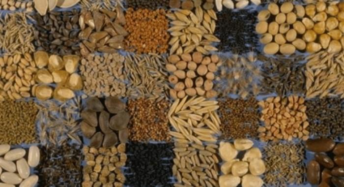 Ο Έλληνας που έσωσε τους παραδοσιακούς σπόρους 3
