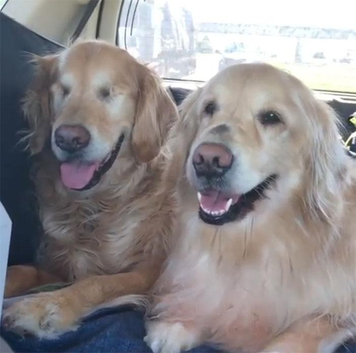 Ένας τυφλός σκύλος έχει για οδηγό μια σκυλίτσα που είναι πάντα δίπλα του – Πραγματικά υπέροχες εικόνες. - Εικόνα 6