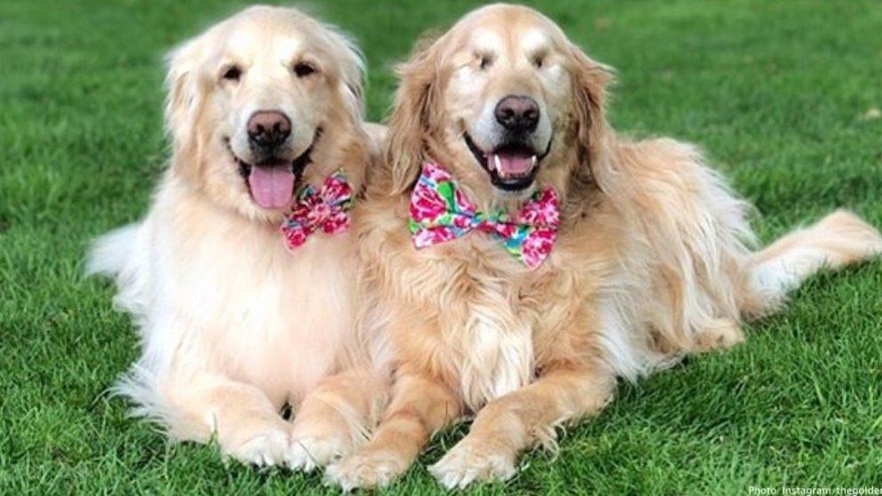 Ένας τυφλός σκύλος έχει για οδηγό μια σκυλίτσα που είναι πάντα δίπλα του – Πραγματικά υπέροχες εικόνες. - Εικόνα 7