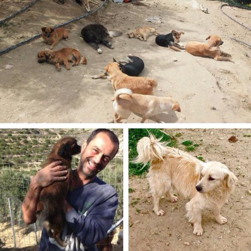 Takis dog shelter